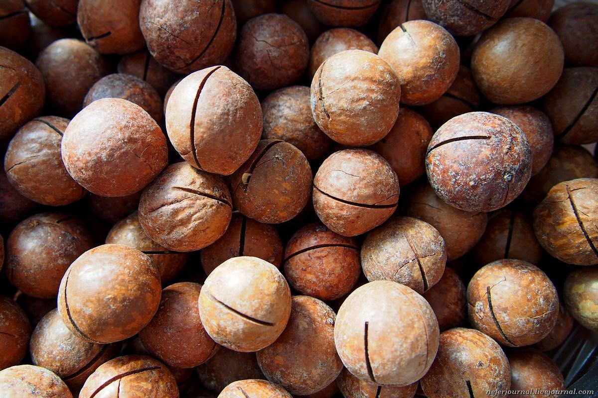 Самый дорогой, самый твердый и самый калорийный орех в мире Ханой-Москва
