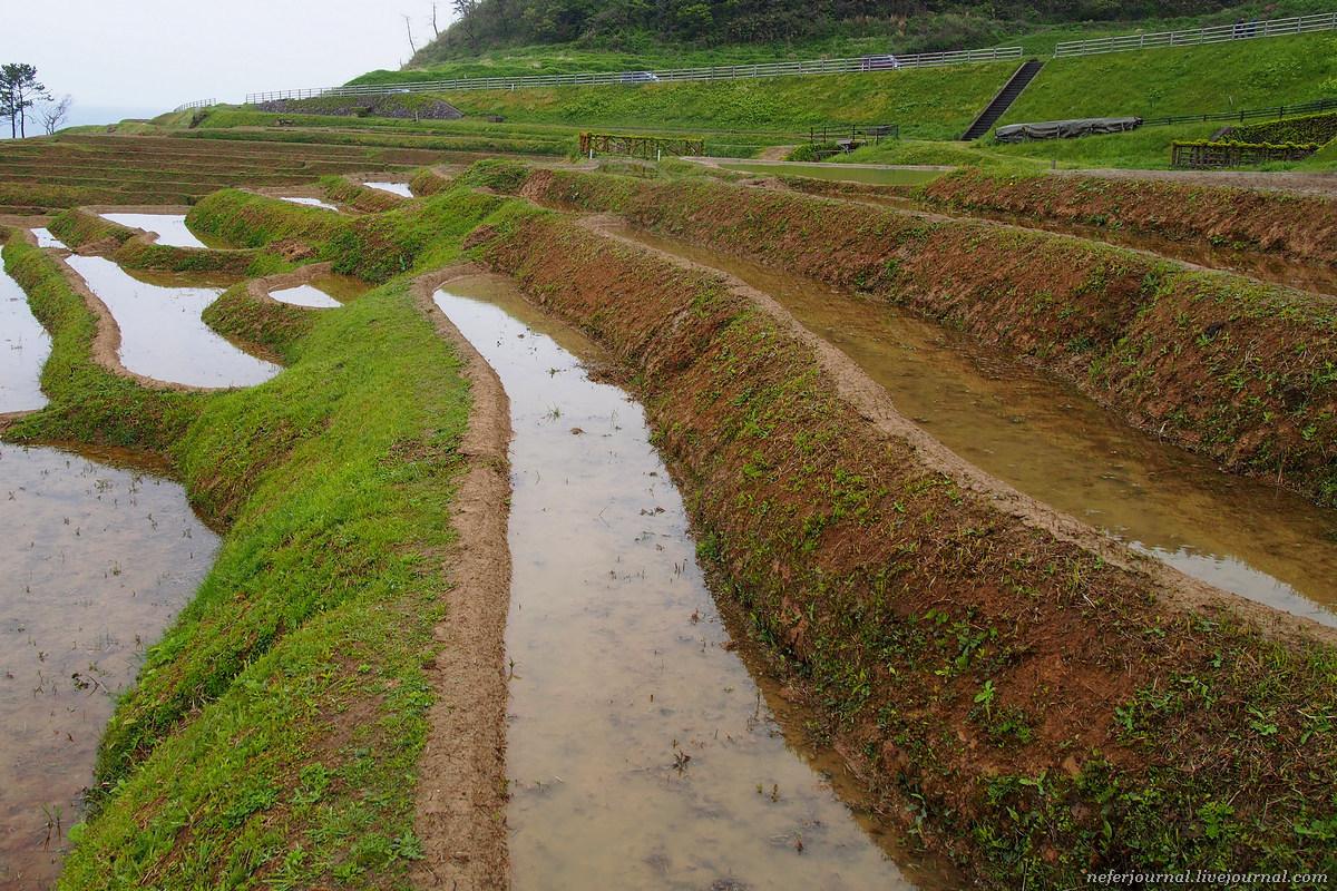 Те самые рисовые террасы