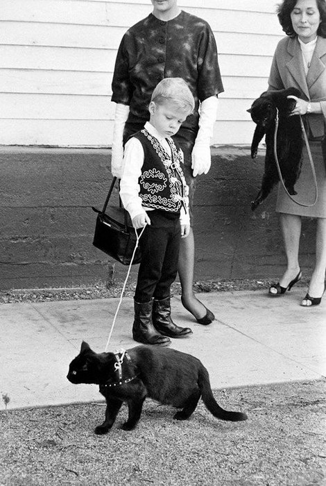 Кастинг котов в Голливуде и про эмблему Columbia Pictures