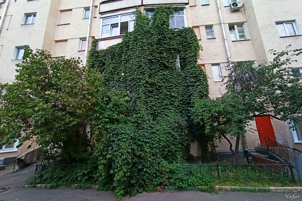 Якиманка. Дом с плющом. moscow,redminote8pro,Россия