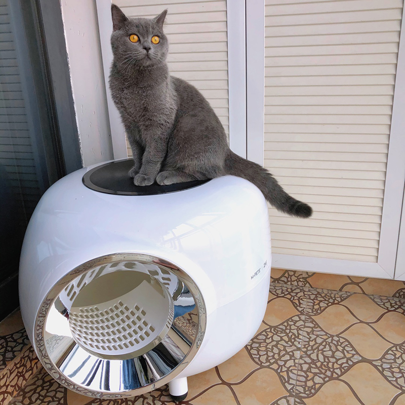 Пять товаров для кошек, которые продаются на Алиэкспресс aliexpress